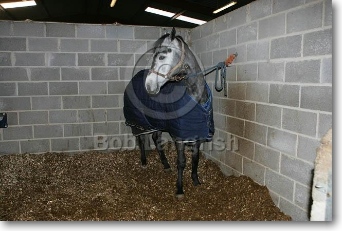 Stable Rugs For Horses Horse With Stable Rug