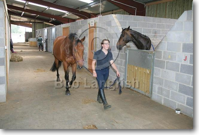 Stable Indoor Leading Horse in Indoor Stable
