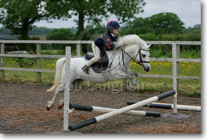 Bob Langrish Equestrian Photographer Search Results
