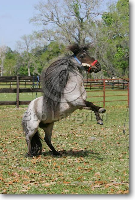 hercules horse