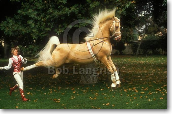 bob langrish equestrian photographer images horse world 677x450