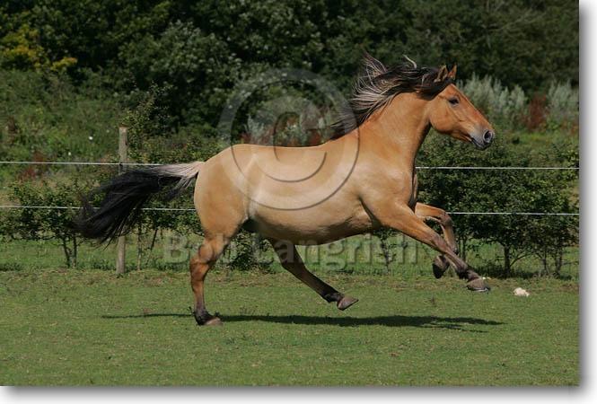 Bob Langrish Equestrian Photographer Travels